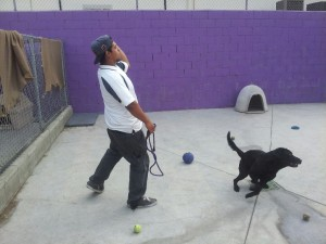 Dayboarding dogs and cats in Los angeles at All Star pet resort in Torrance, CA.