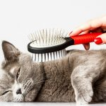 caring for cats