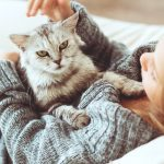 cats for people with allergies