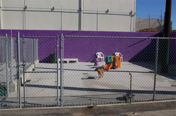 all star pet resort dog and cat boarding in torrance ca.
