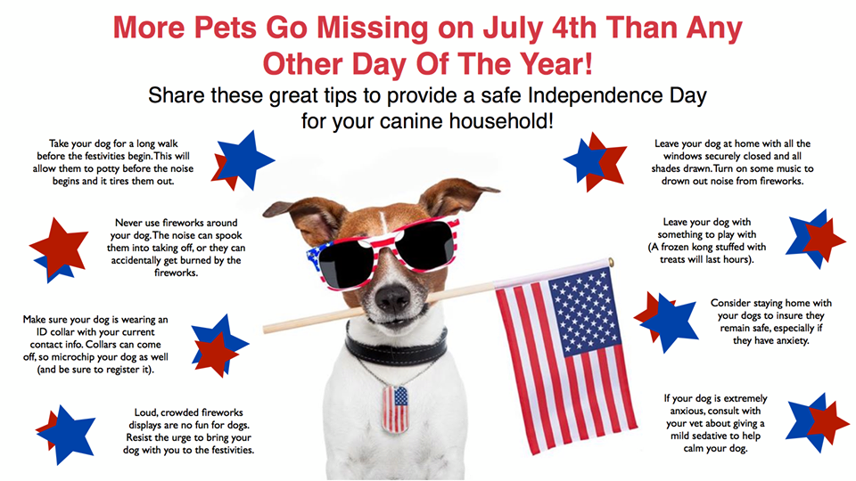 Tips for keeping your pet calm during fireworks this 4th of July.