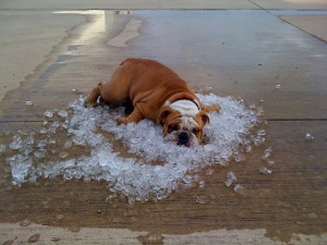 Keeping your pets cool this summer can be a breeze!