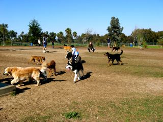 When staying in South Bay, your dog will love a trip to the Redondo Beach Dog Park, located minutes from All Star Pet Resort in Torannce.
