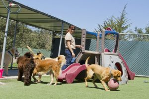 Dog Kennels: What You Can Expect