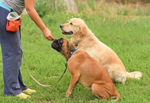 5 Essential Dog Training Products You Need to Buy
