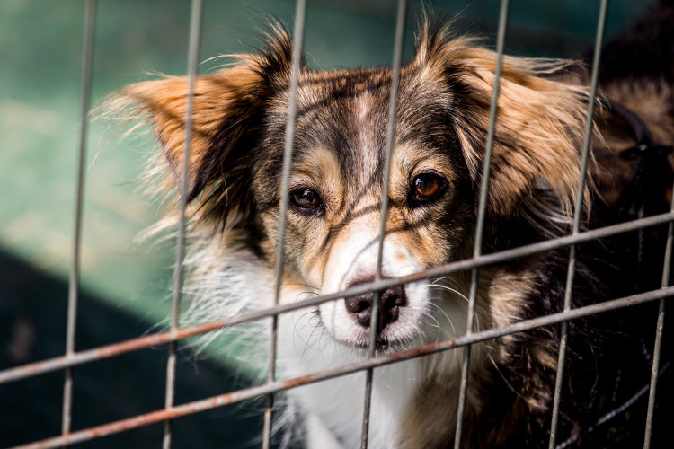 5 Reasons to Adopt Your Next Pet from an Animal Rescue Center