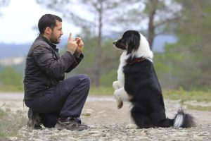 Positive Reinforcement Dog Training: Putting the Basics in Place