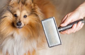 How to Stop Your Dog from Shedding