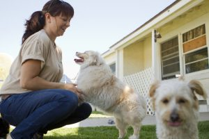 Dog Boarding: How to Cope With Leaving Your Fur Baby For Travel