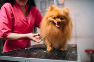 5 Questions to Ask Your Pet Groomer