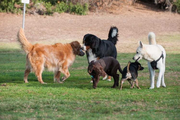 5 Tips For Proper Dog Socialization