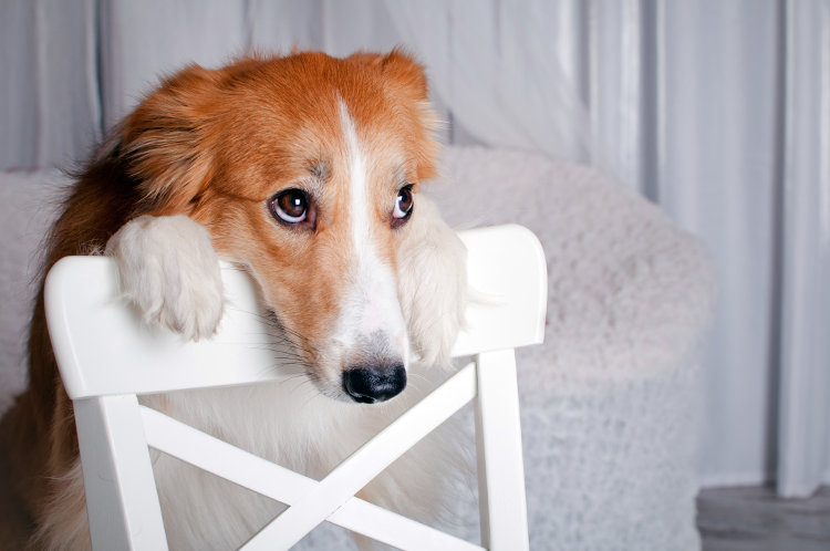5 Solutions for Your Dog's Separation Anxiety