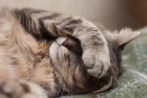 How to Treat Dry Skin in Cats