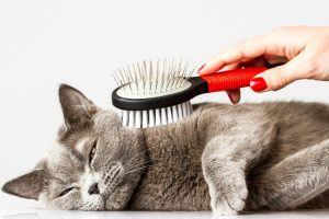 Cat Grooming Los Angeles