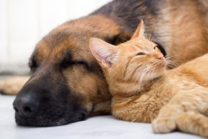 Introducing Your Cat to Your Dog: Everything You Need to Know