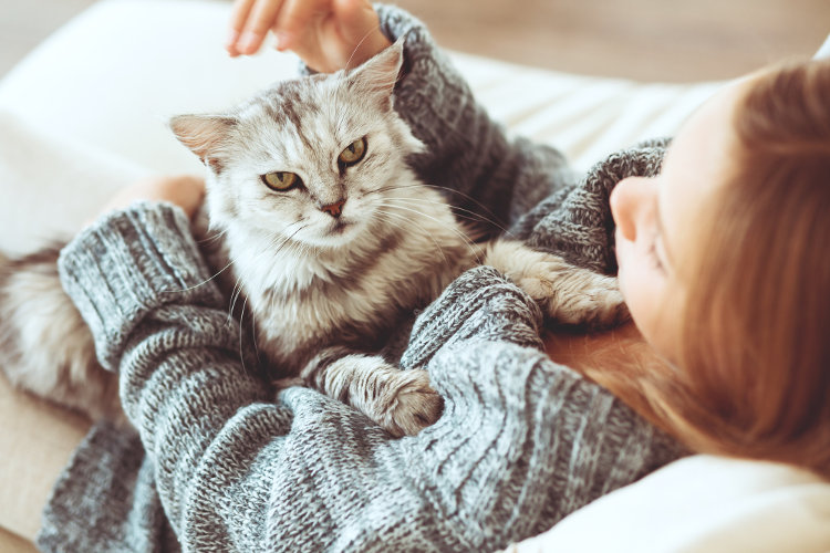 10 Best Cat Breeds for People With Allergies