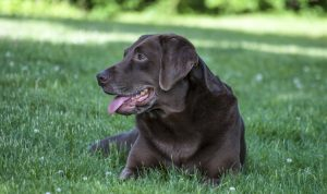 5 Signs Your Dog Has Heartworms (and How to Treat It)
