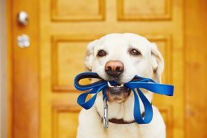 How to Choose the Best Dog Leash for Your Furry Friend