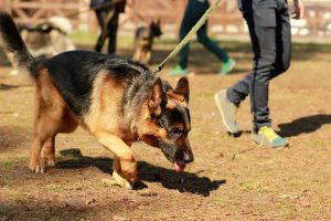How to Train Your Dog to Follow a Scent