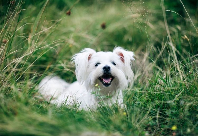 Doggy Day Care: 5 Signs You Can Trust Yours