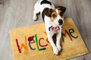 How to Help Your Other Pets Adjust When Bringing Home a New Dog