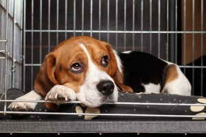 Choosing The Right Pet Kennel In Torrance Before Your Next Vacation