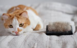 4 Reasons To Invest In Cat Grooming In Los Angeles