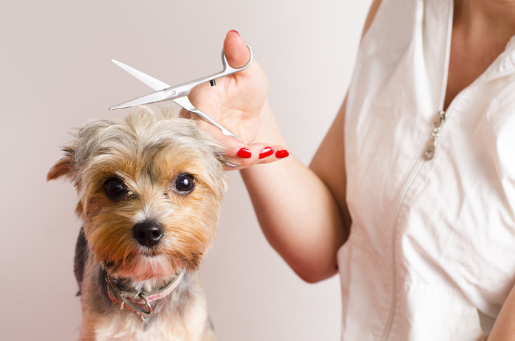 5 Great Benefits of Dog Grooming