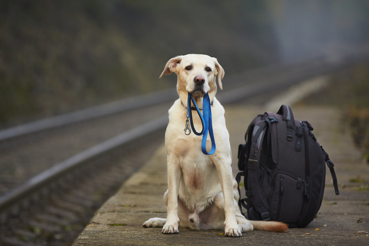 Pack a Doggy Bag: What to Bring When You Drop Your Dog Off for Boarding