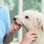 5 Questions To Ask The Person Grooming Your Dog In Los Angeles, CA