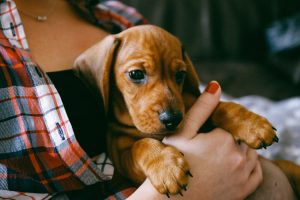 New Puppy Owner's Guide: 5 Mistakes To Avoid As A New Puppy Parent