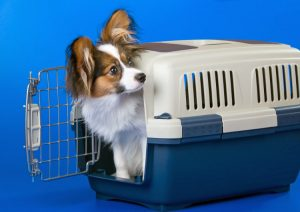 Puppy Crate Training: How To Make The Crate A Safe Space For Your Dog