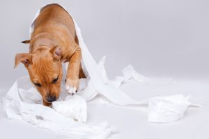 Puppy Eating Poop? 5 Sure-Fire Ways To Stop This Nasty Habit