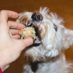 Foods That Can Be Toxic To Dogs & Cats
