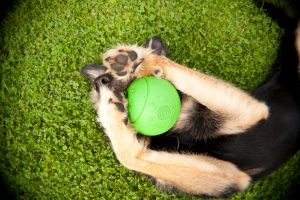 3 Benefits Of Taking Your Pooch To Doggy Day Boarding