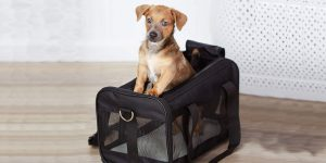 Everything You Need To Know About Pet Carriers