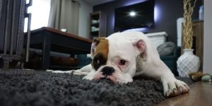 Could Your Pup Benefit From Doggy Daycare?
