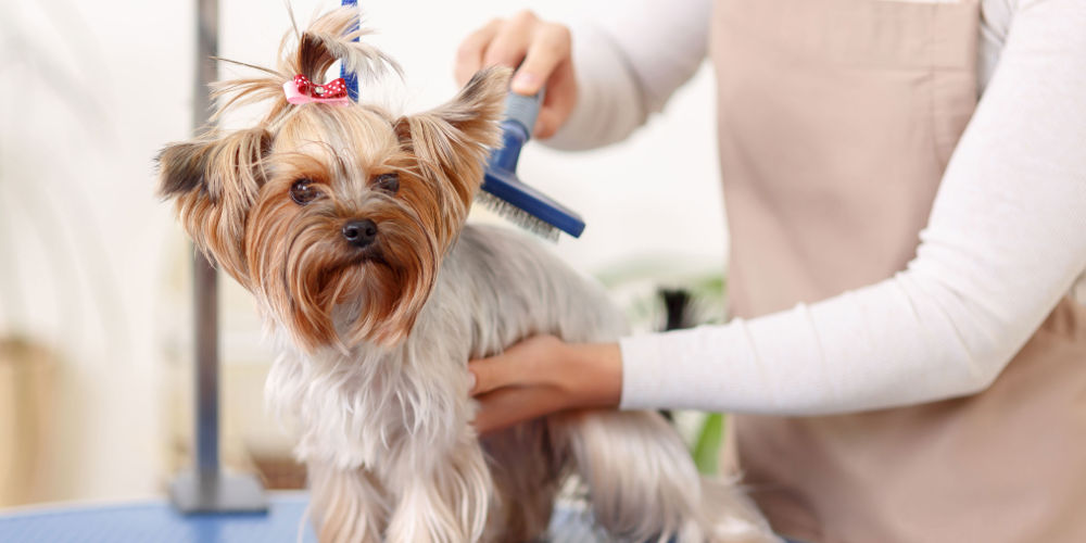 Dog Grooming in Torrance, CA