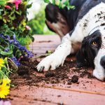 5 Dog Behaviors And What They Are Trying To Tell You