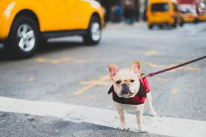 Caring For Your Pooch In The City
