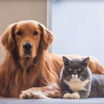 Pet Boarding: Choosing The Right One