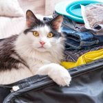 New To Cat Boarding? How To Make It Easier For Them (AND You!)
