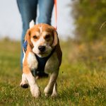 Best Parks & Trails In & Around Torrance To Take Your Dog