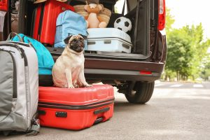 4 Reasons Why Travel Enthusiasts Should Board Their Pets With Peace Of Mind