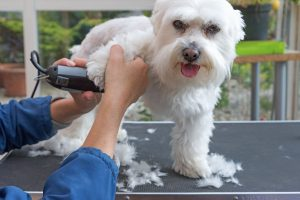 Why Regular Dog Grooming Is Important