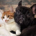 Boarding Cats And Dogs That Are Part Of The Same Family