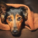 How Can You Keep Your Dogs Calm And Safe During 4th Of July Fireworks?