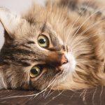Cat Boarding: Myths Or Truths?