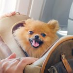 Pet Boarding: Packing The Essentials
