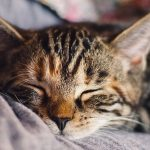 How To Choose The Best Cat Boarding Facility